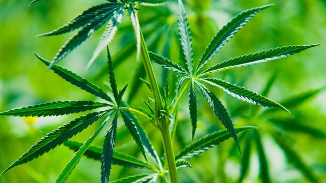 2 Marijuana Stocks To Watch To Start The Month Of August