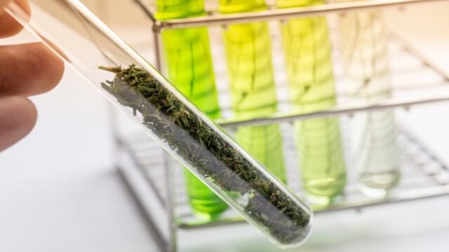https://www.benzinga.com/markets/cannabis/19/07/14147513/kbl-merger-corp-acquires-cannabis-focused-biotech-company