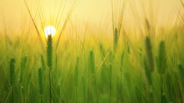 http://www.zacks.com/stock/news/665339/united-natural-foods-unfi-misses-q1-earnings-estimates